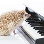 音楽配信サービスの波に乗れ!! Google Play Music がおすすめ!!