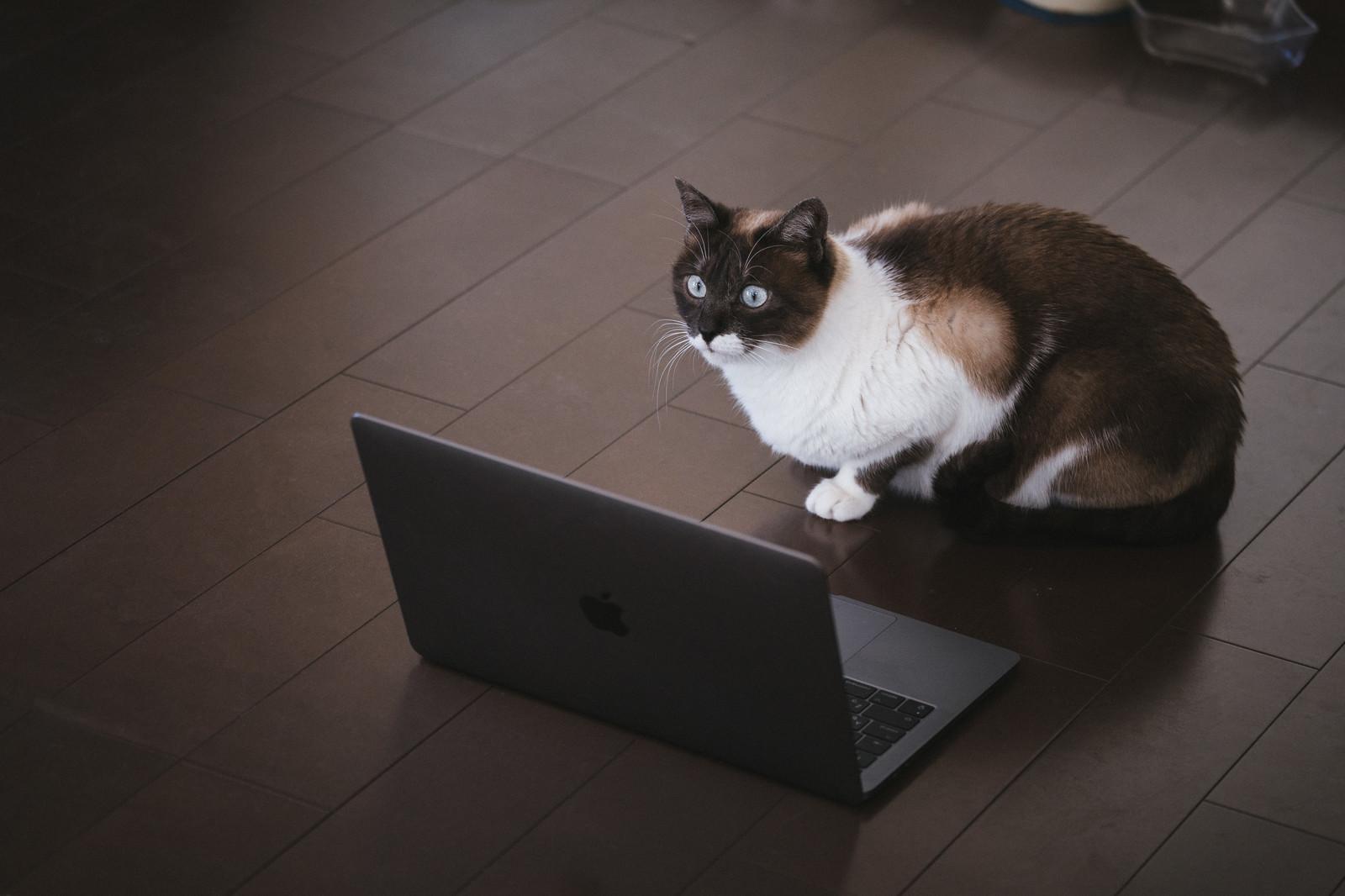 ストレッチポールって知ってる? 骨盤矯正・猫背解消・肩こりや腰痛にも効果あり!!