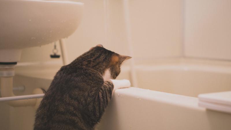 お風呂の小物はこれ一つでスッキリ収納!! 「タオルバーバスケット」