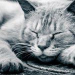 快眠ツール「Sleepion2」不眠症やうつの改善にも効果あり